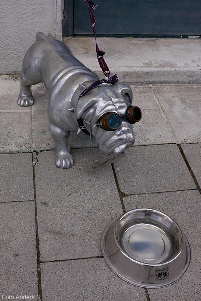 silvrig, silverhund, hund, med glasögon