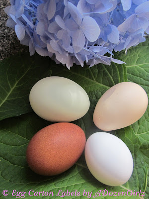 Various egg colors, brown, blue, white