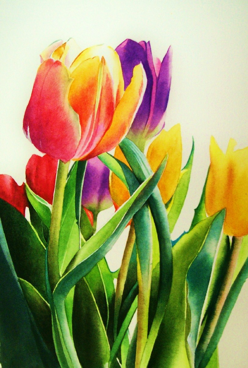 tulips in the spring - photo #40