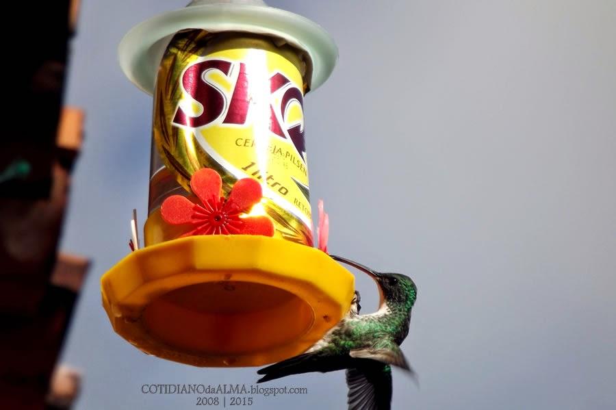 Carnaval, Skol, Verão no Brasil, Ezequiel Rodrigues, Cotidiano da alma, beija-flor
