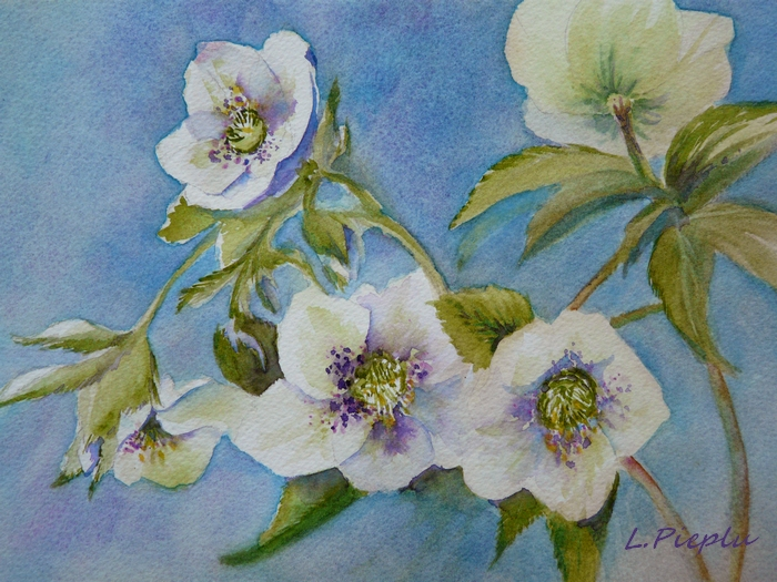 Hellebores+blanches+mini