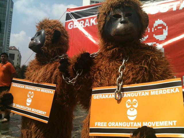 COP Luncurkan Gerakan Orangutan Merdeka