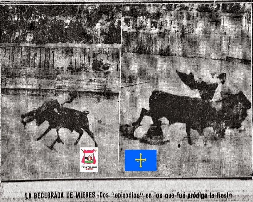 MIERES TOROS BECERRADA