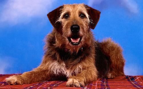 Imágenes de perros, cachorros, dogs y caninos