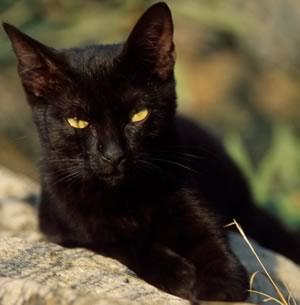 Associazione Italiana Difesa Animali Ed Ambiente Il Gatto Nero