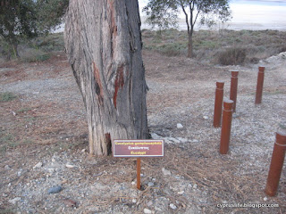Sign showing a eucalyptus tree in Larnaca, along the Salt Lake trail