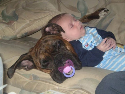 Best Buddies Seen On www.coolpicturegallery.us