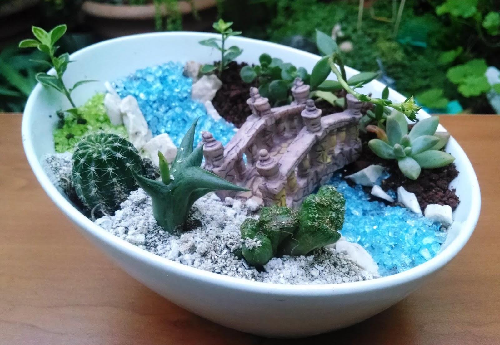 Kaptus el salvador mini jardines de cactus y plantas - Jardines de cactus y suculentas ...