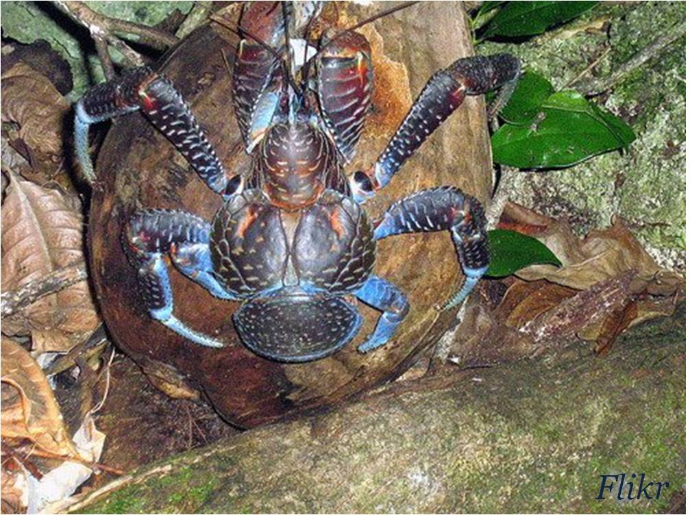 Horseshoe Crab Attack Crabs 39 Ability to Attack