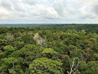 Minha Manaus: Visita ao Museu da Amazônia - MUSA