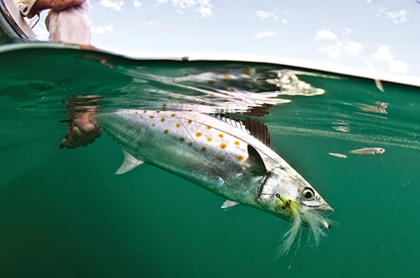 http://www.saltwatersportsman.com/best-flies-fly-fishing/best-fly-have-hand-clouser-deep-minnow