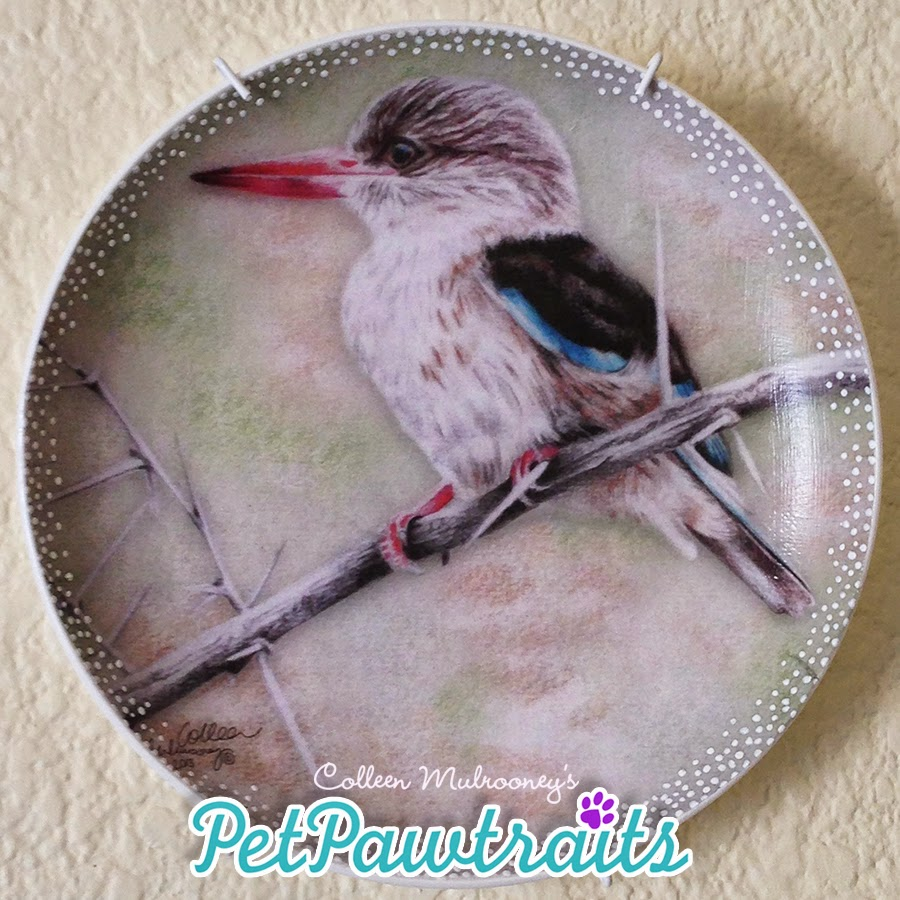 South African Birds :: Brown Hooded Kingfisher::  Coloured pencils, decoupage, hand finished
