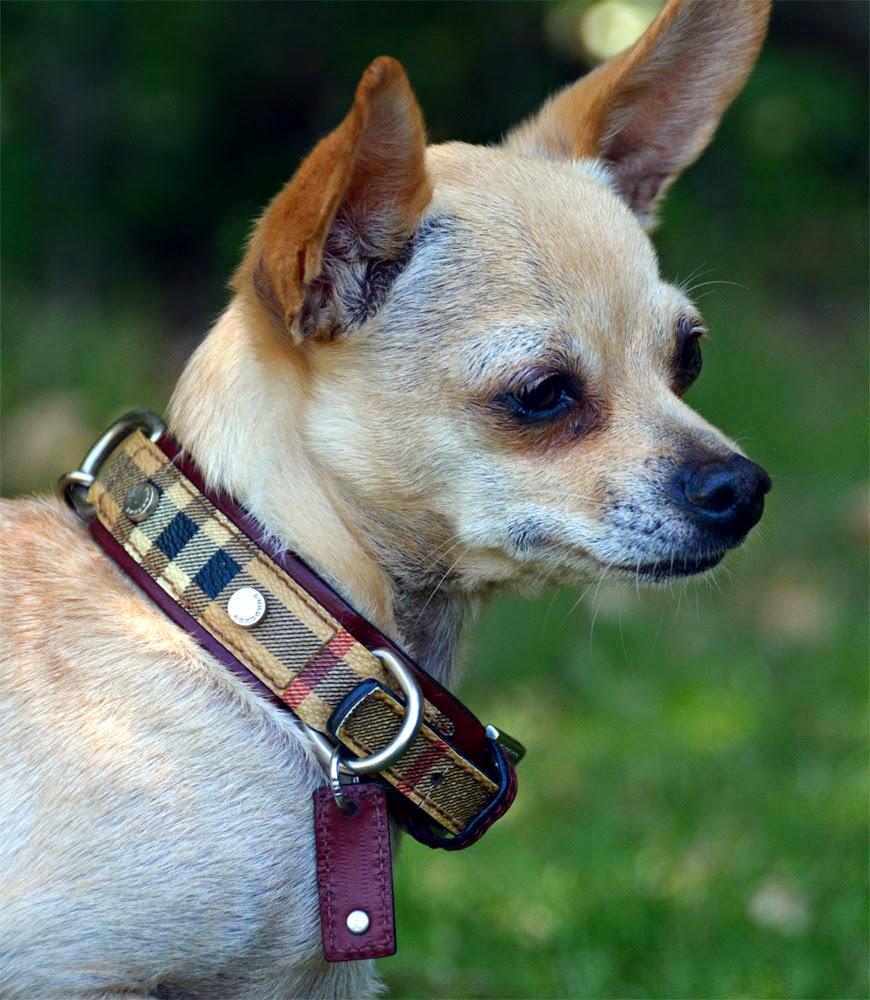 Burberry Dog Collar Replica