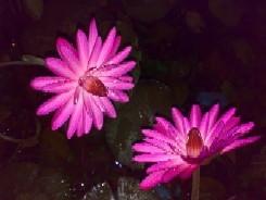 प्रकृति की सुंदरता को निकट से देखने के लिए