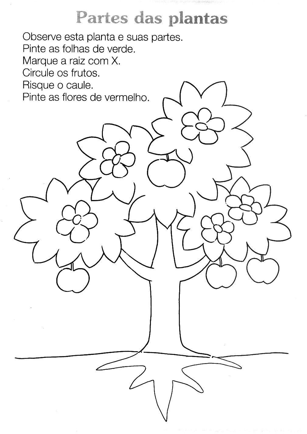Fabuloso BAUZINHO DA WEB - BAÚ DA WEB : Atividades sobre as plantas e  CT72