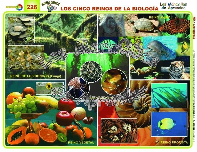 5 reinos biologia: