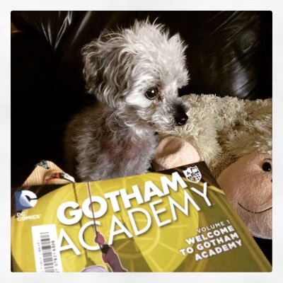 A fuzzy grey poodle, Murchie, sits slightly behind a trade paperback copy of Gotham Academy Volume One. He's right beside a sheep-shaped pillow on a black leather couch. The book is positioned so only the title and the image of a hand clinging to a rope against a large, yellow clock is visible.