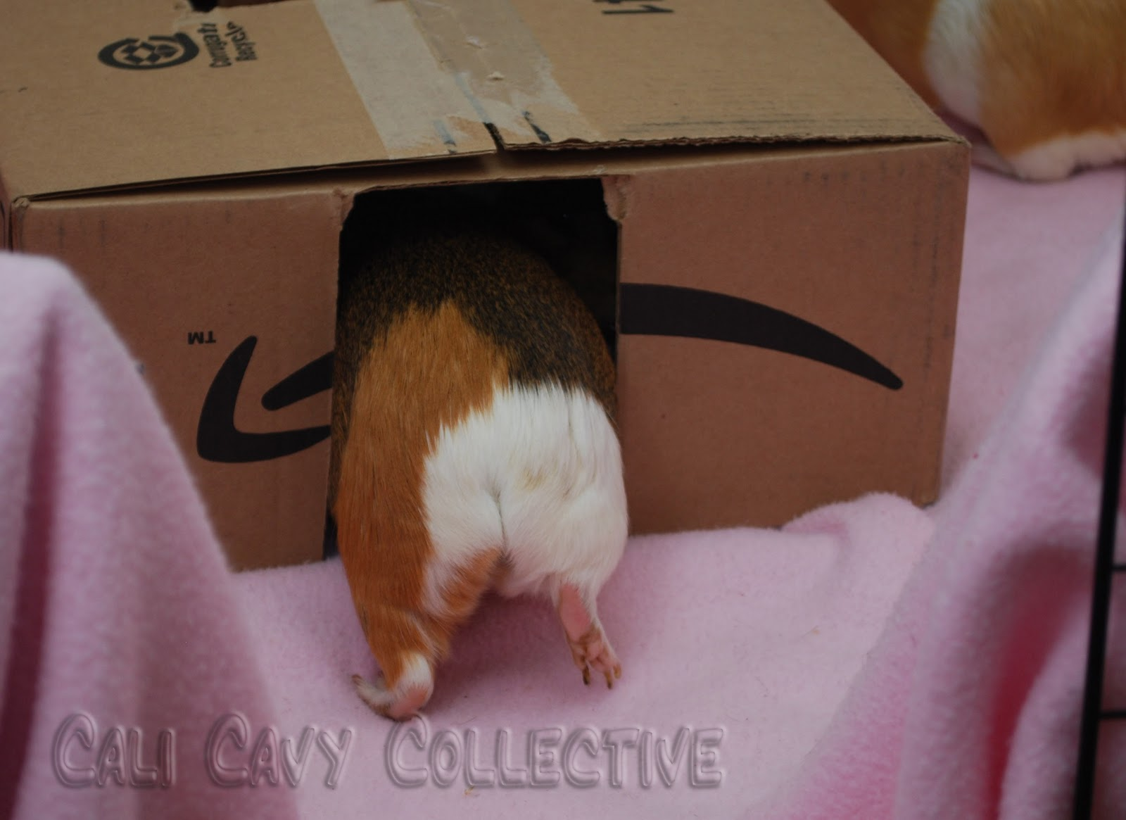 Cali cavy collective a blog about all things guinea pig for Homemade guinea pig