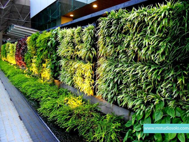 Tips Membuat Vertikal Garden di Rumah