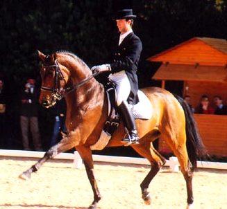 Foto de un jinete montado en su caballo