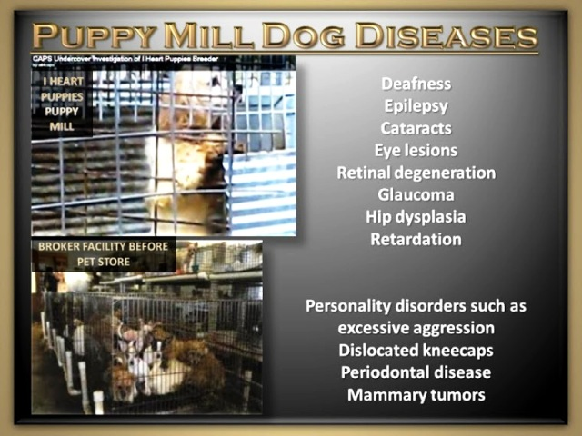 PUPPY MILL DISEASES