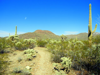 Hiking the Brown Mountain trail in the Tucson Mountains