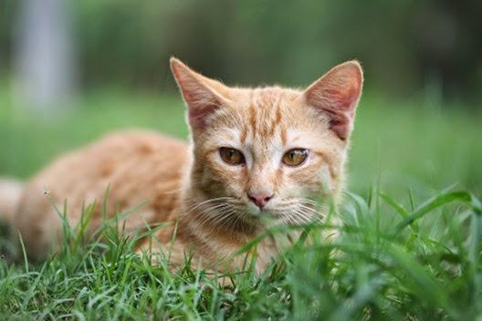 Dlaczego kot się oblizuje?