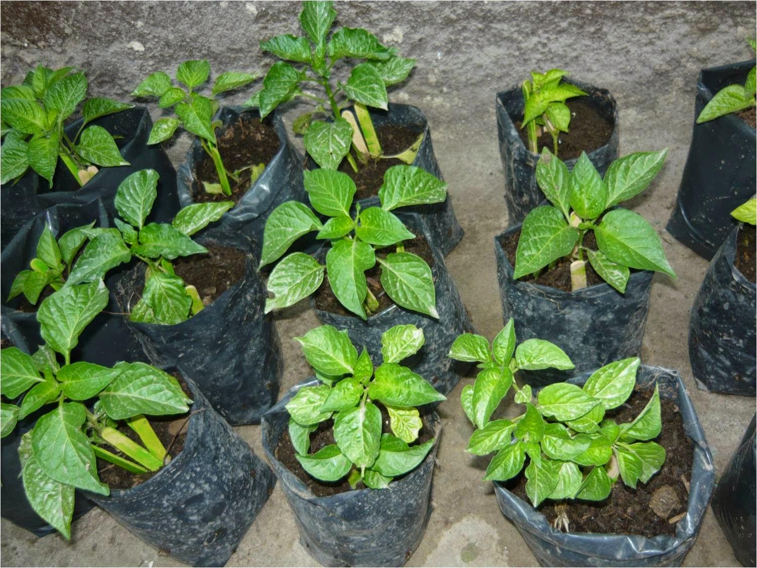 Alternativa ecol gica criterios para el uso de envases - Plantas de plastico baratas ...
