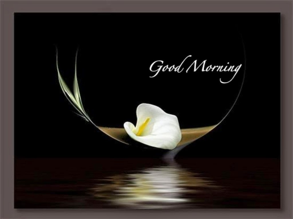 Whatsappden Good Morning Images With Flowers Whatsapp Download