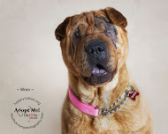 Wren needs her own fur-ever home!