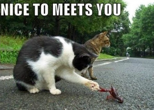 Funny animal pictures with captions for adults - photo#6