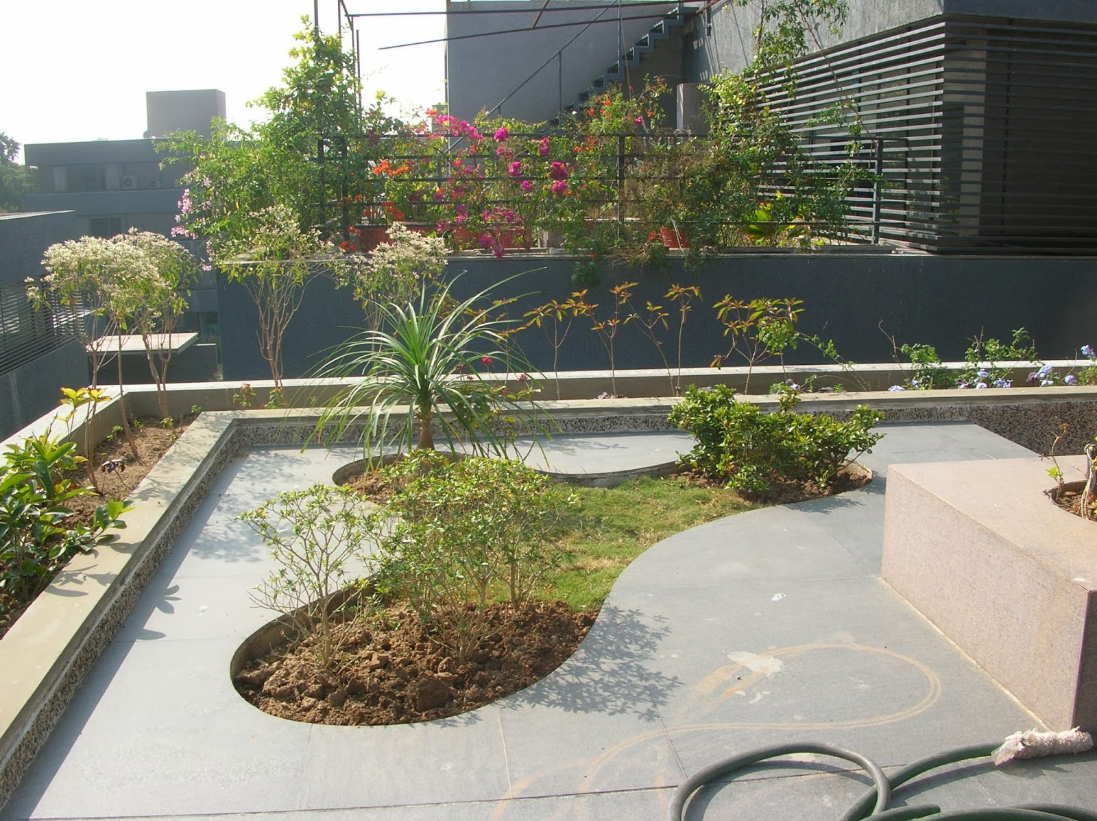 Bonsai trees and plants in ahmedabad for sale garden for Terrace design