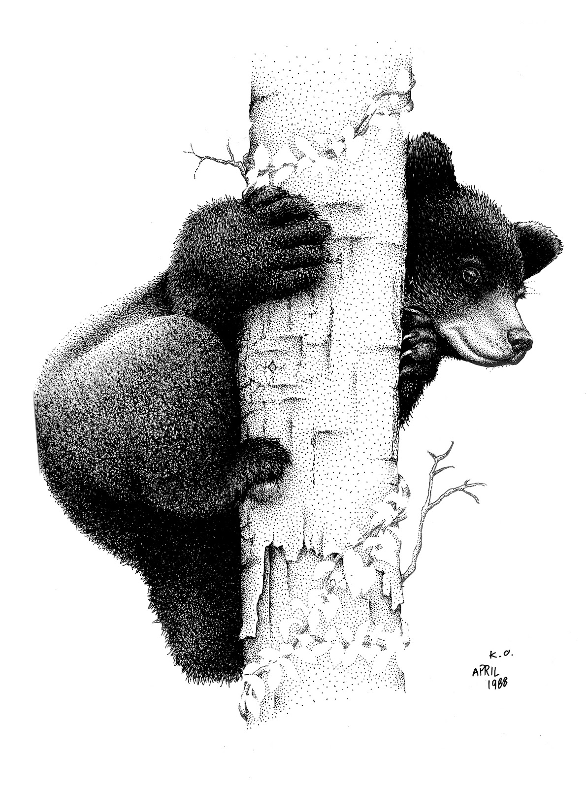Black Bear Cubs Drawing Images amp Pictures Becuo
