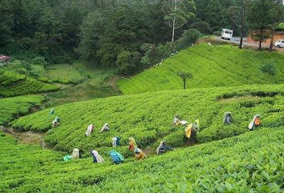 http://1.bp.blogspot.com/-Kxh7rZrn-cc/Ts75pBo2hSI/AAAAAAAAAXg/fy07iv7uJeo/s1600/TeaGarden_in_Sylhet%252C_Bangladesh.jpg