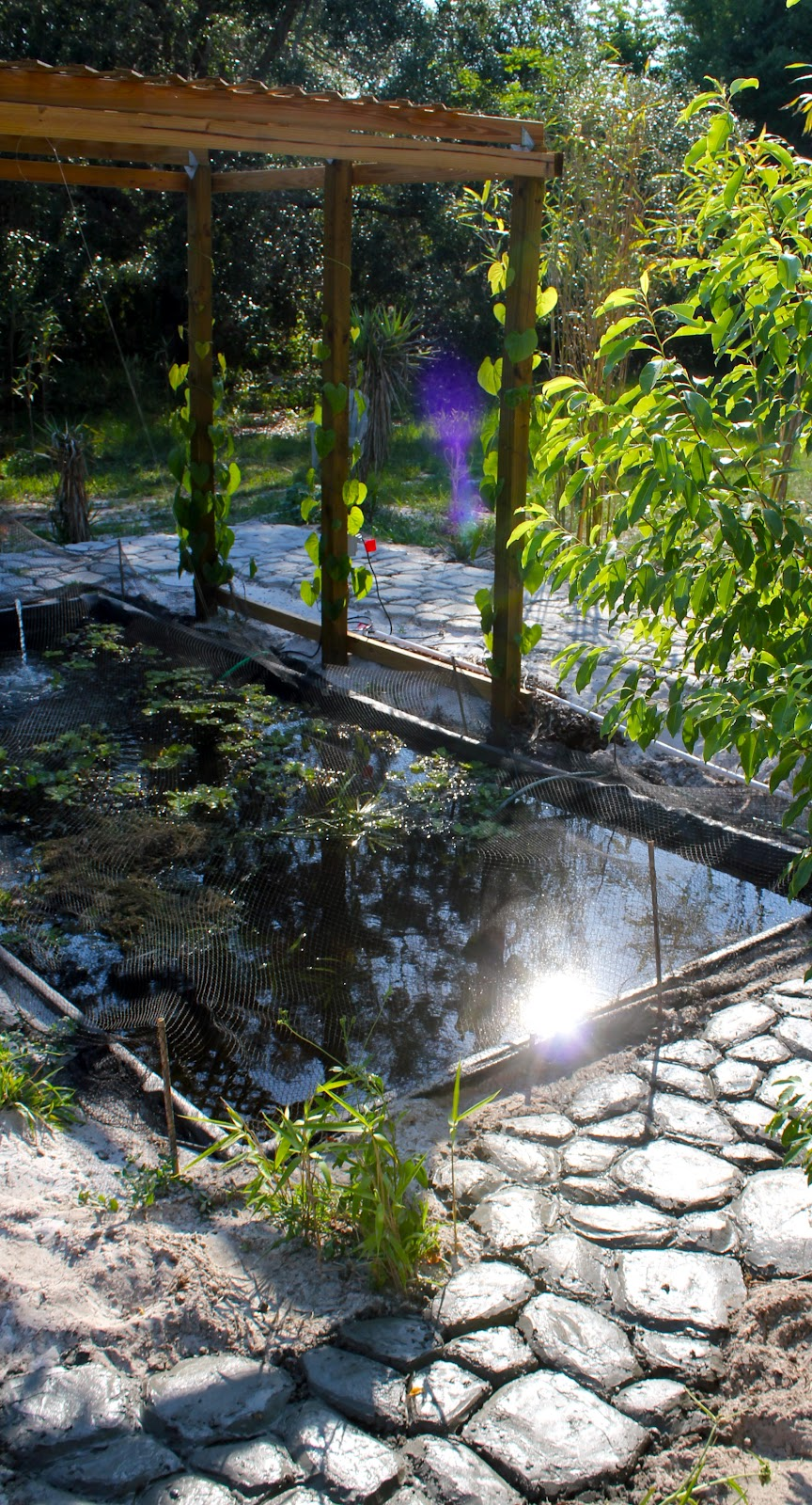 Fiercely hot florida phillip 39 s natural world for Koi pool construction