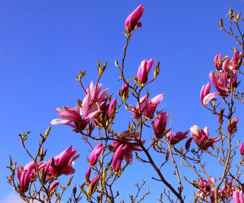 Cette semaine carlux et ailleurs 26 mars il fait froid mais c 39 est quand meme le printemps - C est quand le printemps 2017 ...