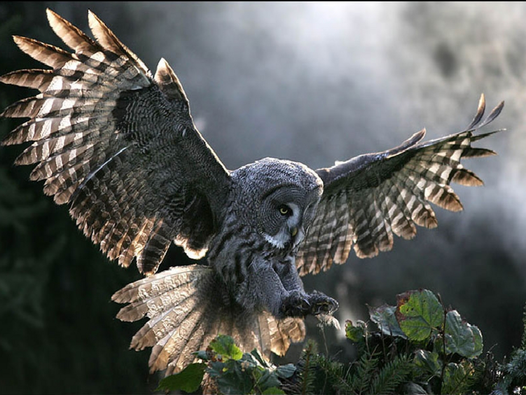 Wallpaper Collections Barn Owl Background