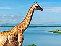 juegos de jirafas
