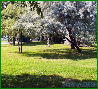 peisaj primavara parcul lumea copiilor bucuresti