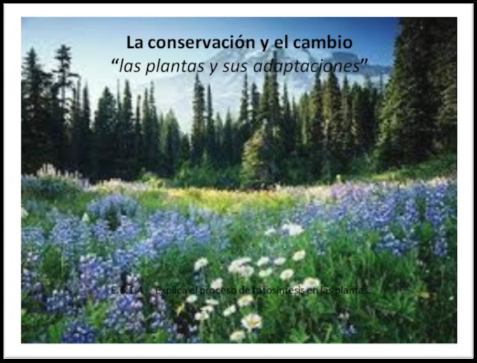Conservación y cambio: adaptaciones de las plantas