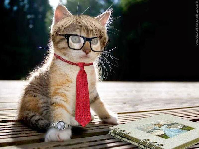 Gambar Kucing Belajar Lucu