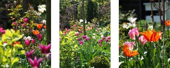 """Smukke og farverige bede med Tulipaner """"Ballerina"""",  """"New Design"""", Don Quichotte og """"Maytime"""" blomstrer i haven"""