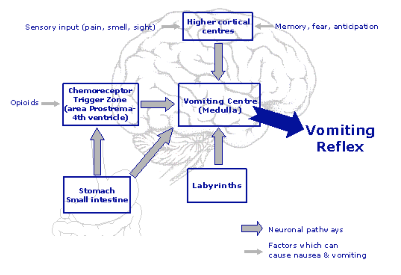 Inter-facility Considerations for Managing Nausea and VomitingNausea And Vomiting Mechanism