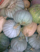 There are many different varieties of pumpkin