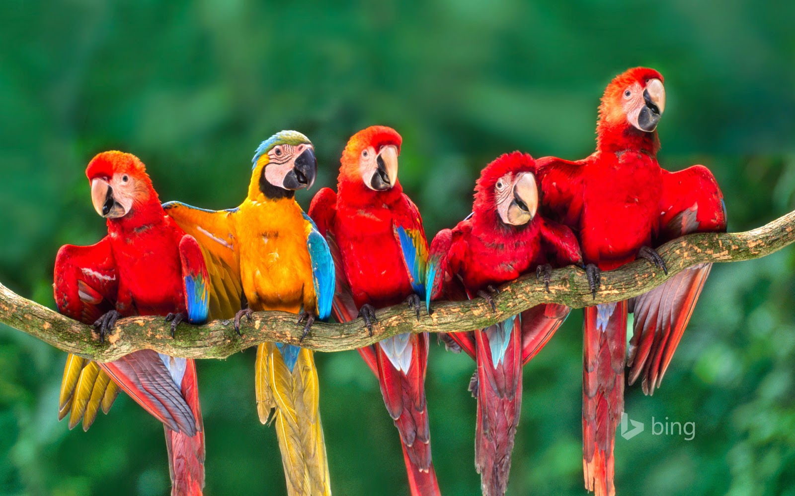 Macaws, Tambopata National Reserve, Peru (© Frans Lanting/Getty Images)