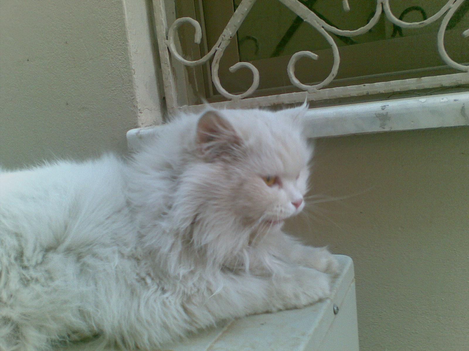 yang lucu karena selain ia cerdas kucing juga sangat lucu dan cantik