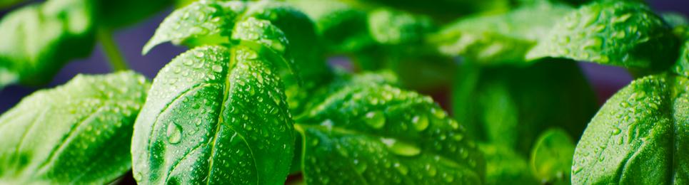 Healthy Food Tips | Weight Loss Program | Natural Food