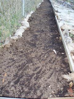derek freiman garden - fava planting