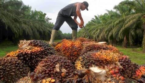 http://dangstars.blogspot.com/2014/10/minyak-indonesia-paling-ditakuti-dunia.html