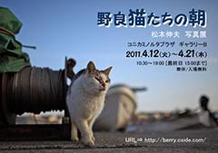 【ありがとうございました】<br>松本伸夫 写真展<br>野良猫たちの朝